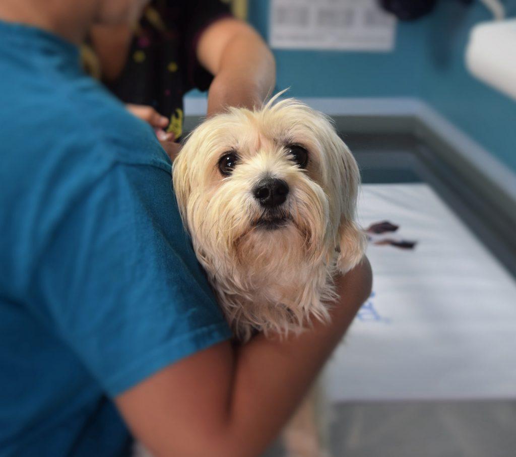Beim Tierarztbesuch
