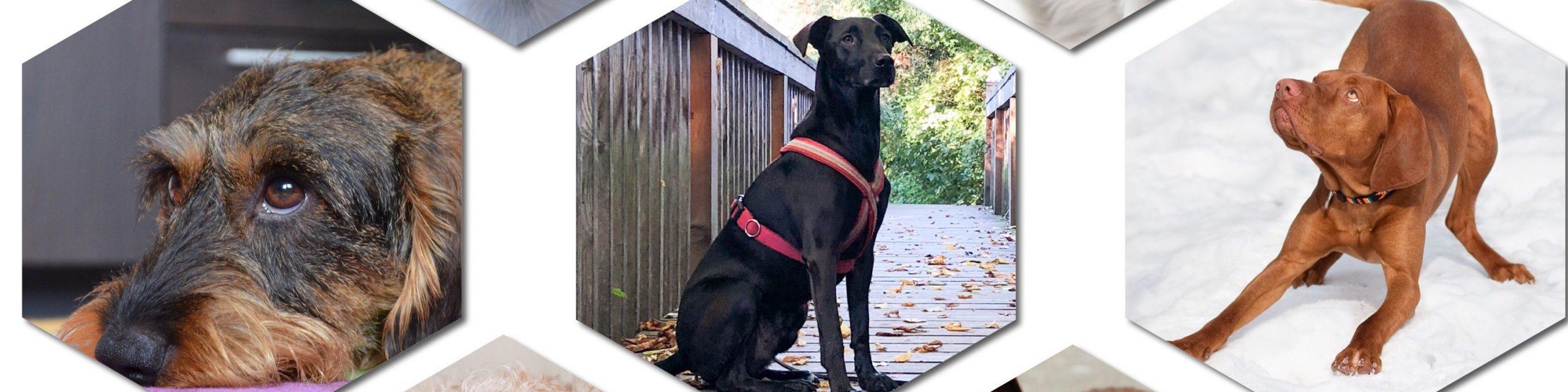 DNA Test für Hunde - die Ergebnisse