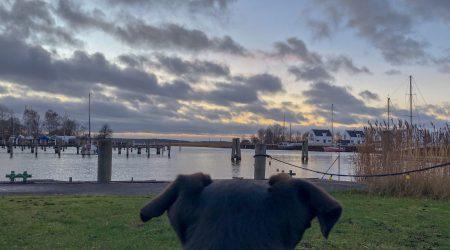 Hundeurlaub an der Ostsee - im Yachthafen Peenemünde