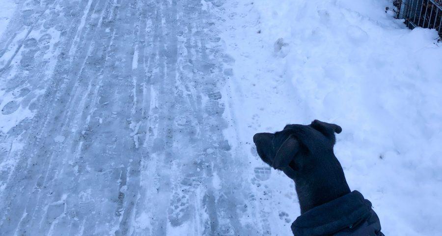 Stadthund im Winter